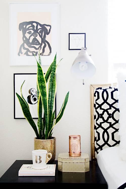plantas que purificam o ar