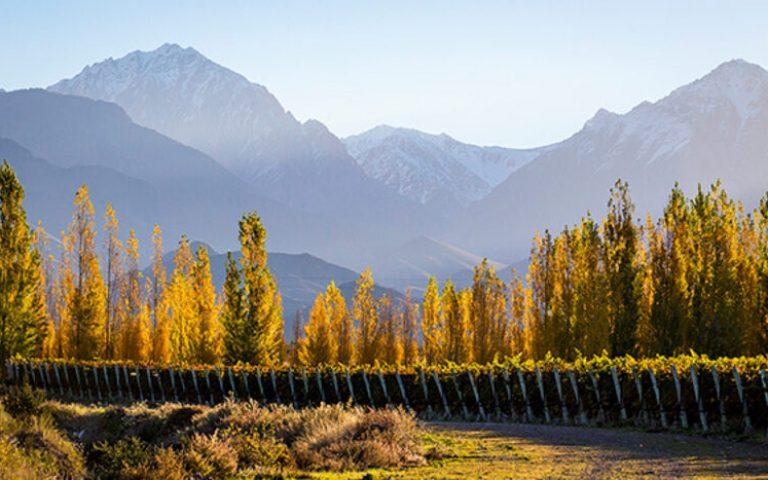 Mendoza: Paraíso dos Vinhos na América Latina